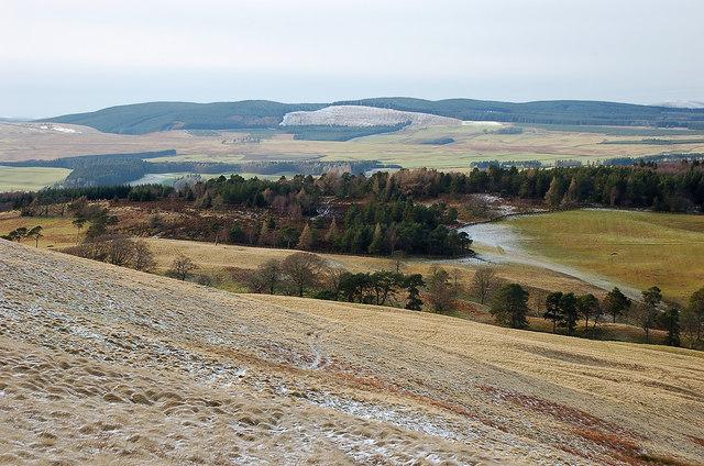 Loch Wood