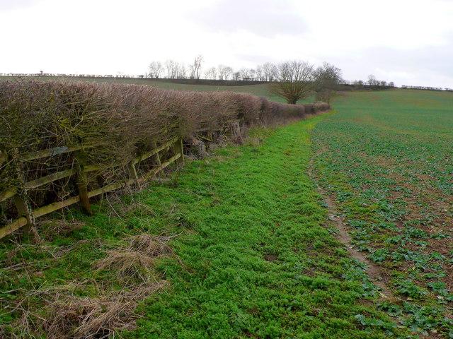 Hedgerow near Snitterfield
