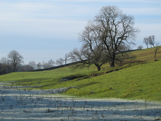 Frosty pastures and leafless trees below Hadrian's Wall west of Walltown Farm