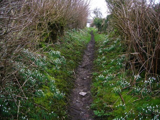 Snowdrop lined footpath entering Low Biggins