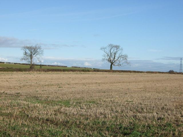 Farmland east of Bramham