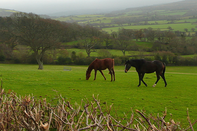Horses at Selworthy