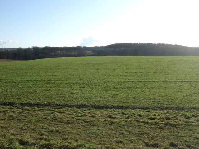Farmland west of Bramham
