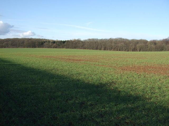 Farmland towards Lady Wood