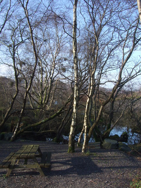 Picnic bench and trees at Llanberis