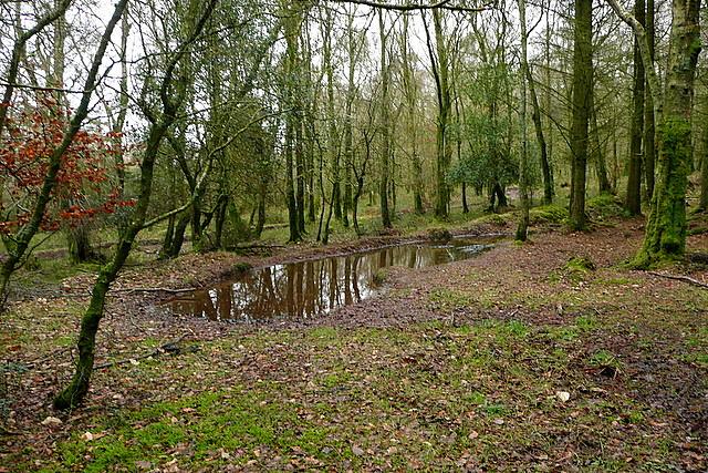 Tivington and Great Headon Plantations