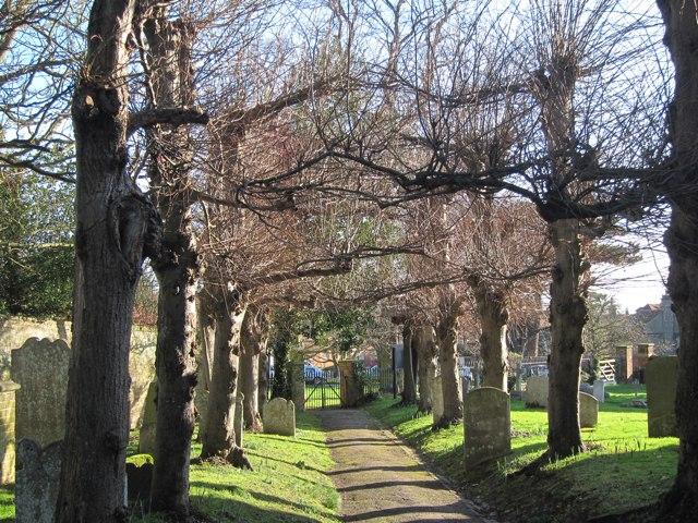 Tree lined path