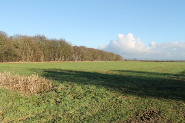 Fields and Low Plantation