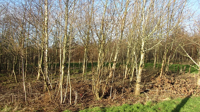 Cambusnethan Wood