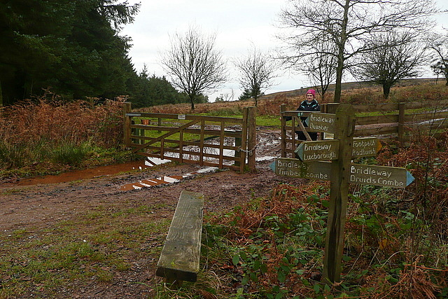 Gate onto Withycombe Common