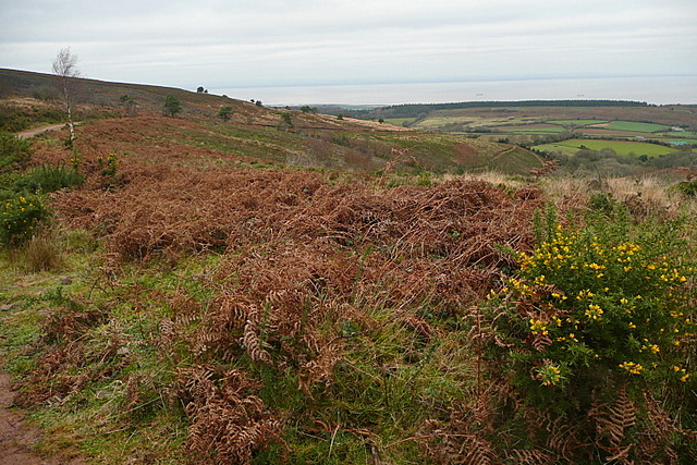 View from Rodhuish Common
