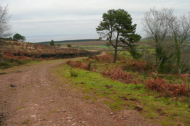 Bridleway from Rodhuish Common