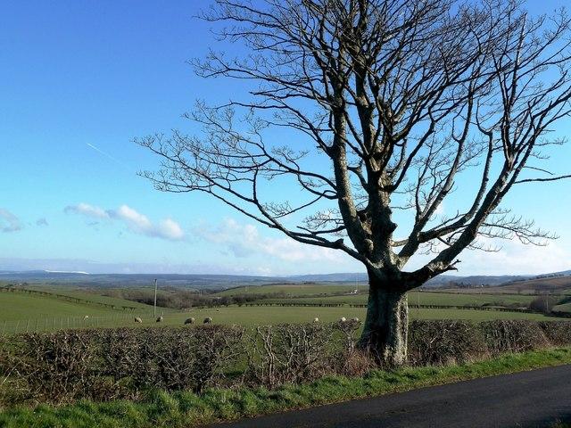 Winter Tree Near Maybole