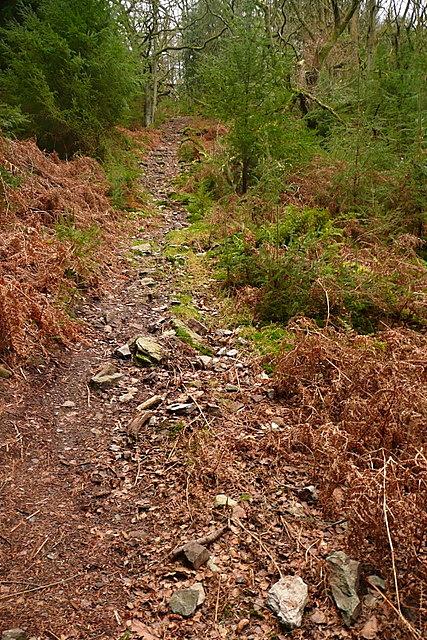 Bridleway through Longcombe Hill Wood