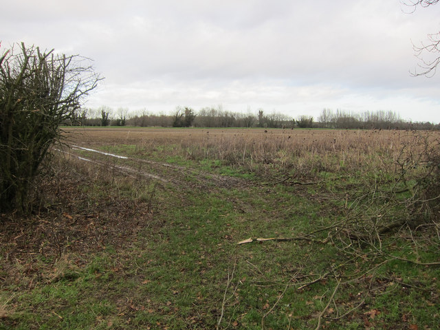 Field off Thornham Road