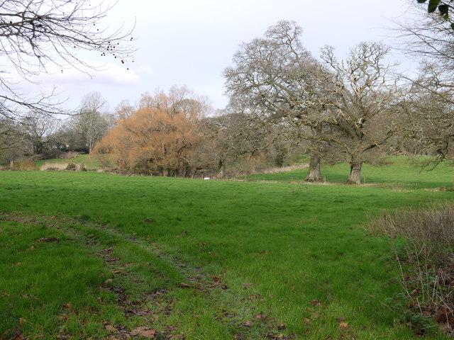 Field beside the footpath, Lower Keaton, near Ivybridge