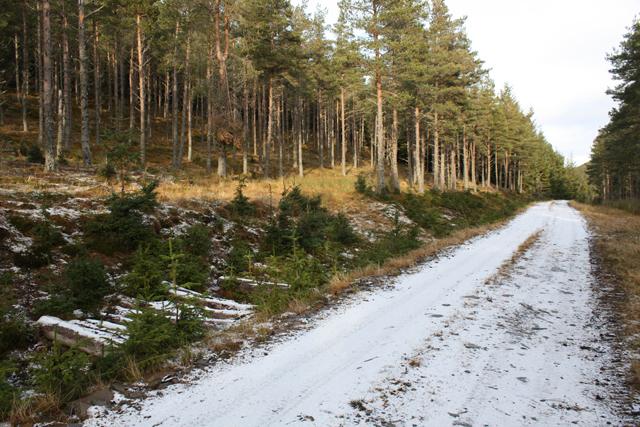 Forest track on Creag an Iaruinn