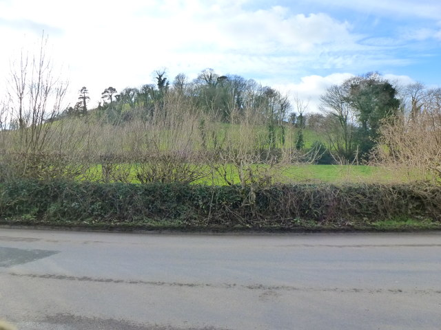 View of hedge and hill side from lay-by on Ermington to Ivybridge road