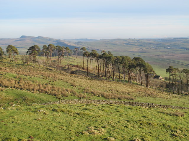 Rough pastures and plantation west of Alloa Lea