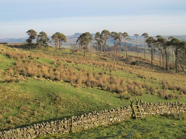 Rough pastures and plantation west of Alloa Lea (2)
