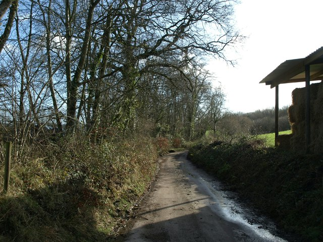 Lane to Combe Raleigh