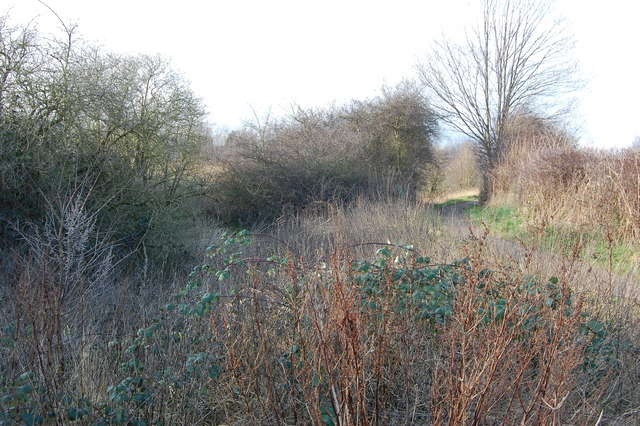 Cuckoo way at Walford Road looking west