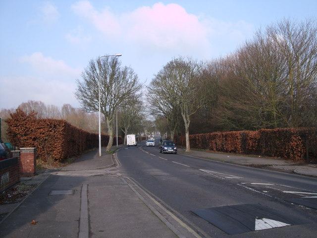 Beech hedges, Pinehurst Road