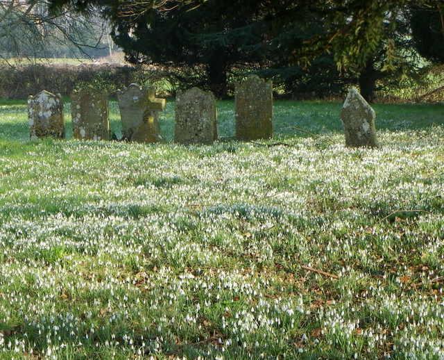 Snowdrops, St George's Churchyard