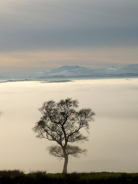 A tree above the clouds