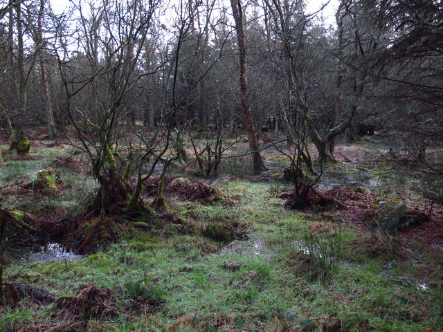 The deep, dark wood west of Cockmount Hill