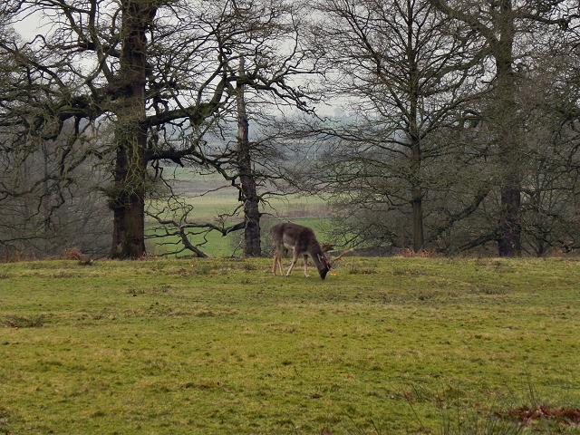 Dunham Deer Sanctuary