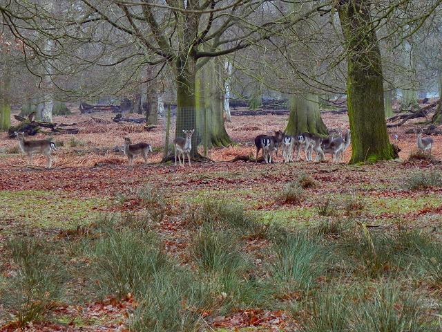 Deer Herd, Dunham Deer Sanctuary