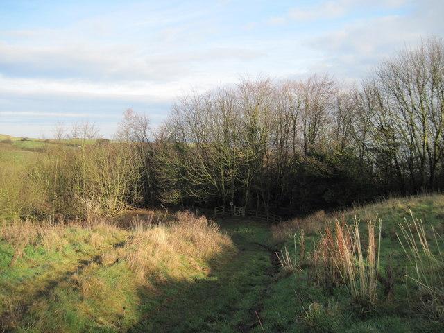 Footpath  into  the  Woods  at  Hayburn  Wyke