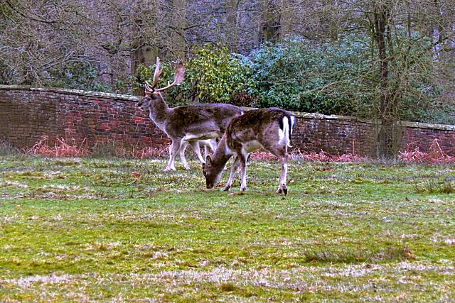 Dunham Massey Deer Sanctuary