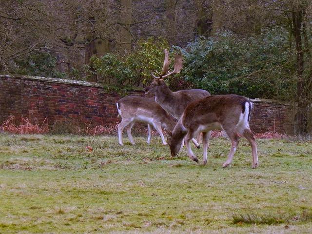 Deer Sanctuary, Dunham Park