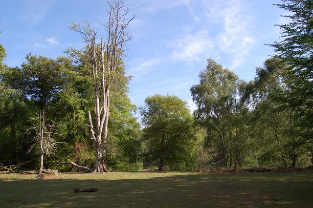 New Barrow Moor New Forest