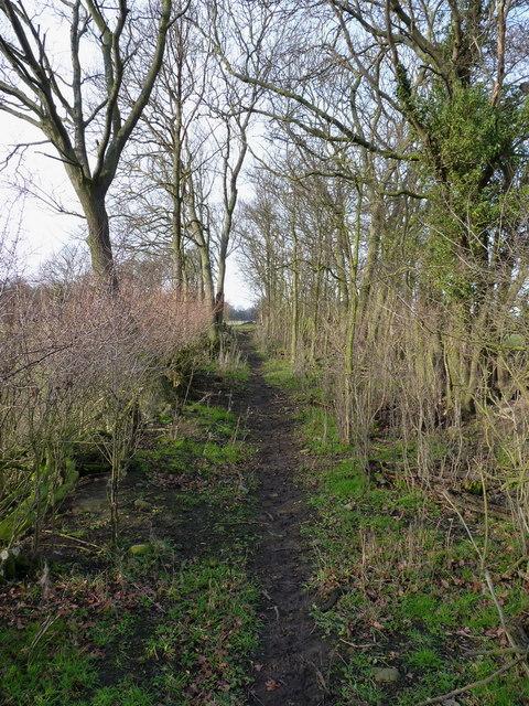 Path through the woods near Wood Hall