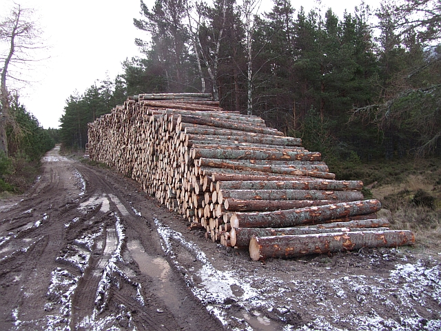 Log pile, Inshriach Forest