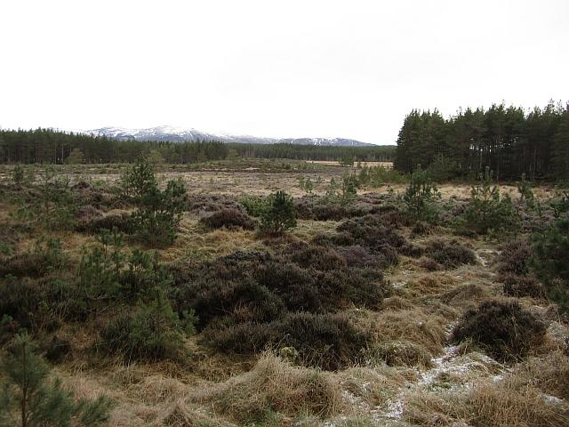 Marshy area, Inshriach