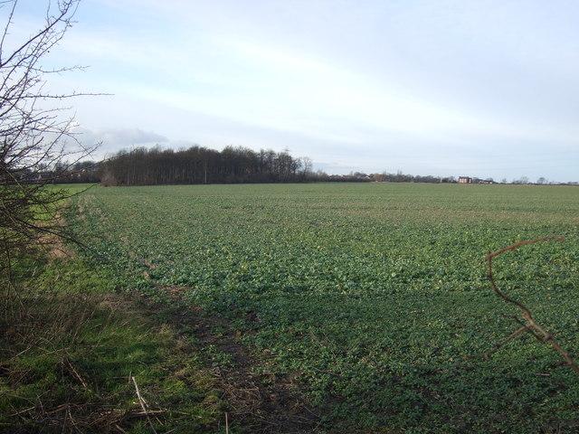 Farmland, Whinmoor