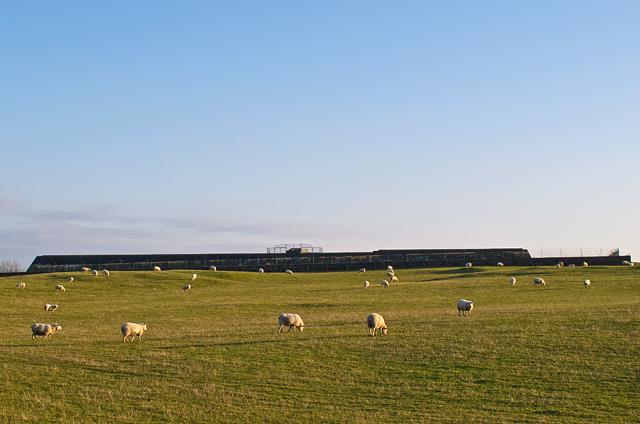 Grazing land near Finmont Farm