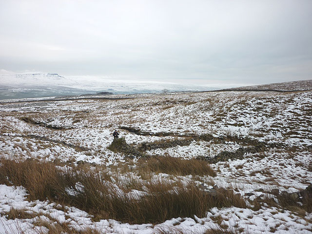 Ruined fold by Pot Beck, Borrins Moor