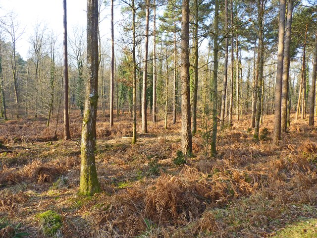 Woodland just outside Holmhill Inclosure