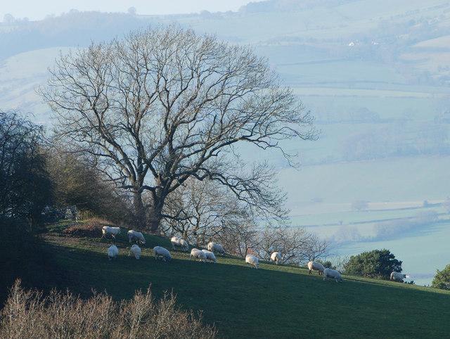 February in Shropshire
