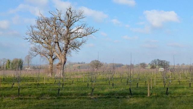 Orchard land