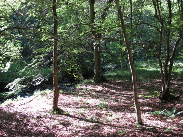 Small clearing in West Dipton Wood