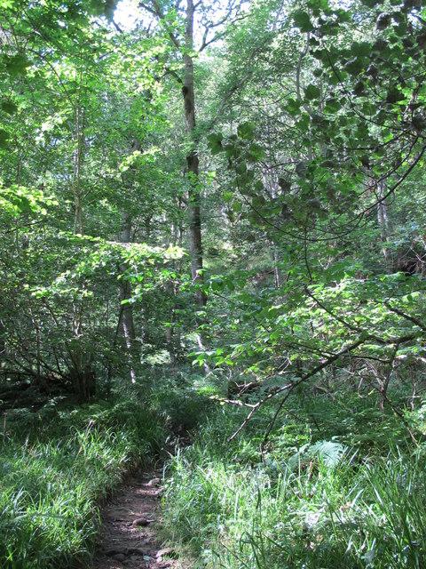 Path in West Dipton Wood