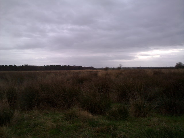 View over the marshes