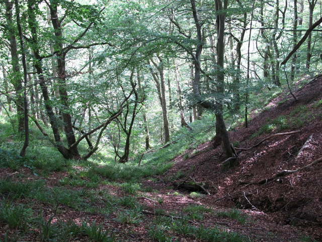 Cleugh of an un-named sike in West Dipton Wood