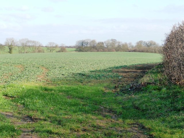 Crop field at Norman Hill